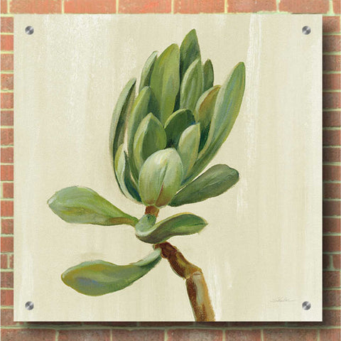 Epic Art 'Front Yard Succulent III' by Silvia Vassileva, Acrylic Glass Wall Art,36x36