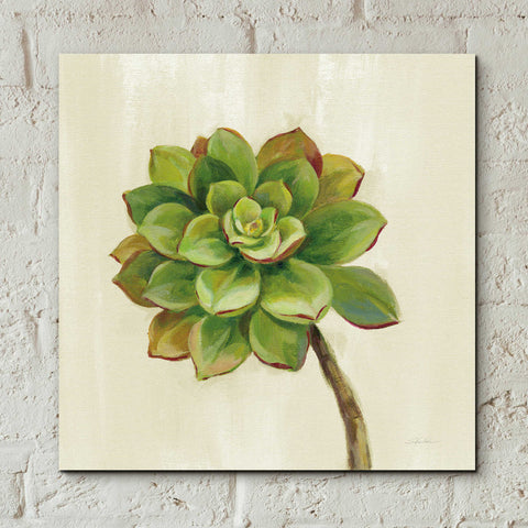 Epic Art 'Front Yard Succulent IV' by Silvia Vassileva, Acrylic Glass Wall Art,12x12