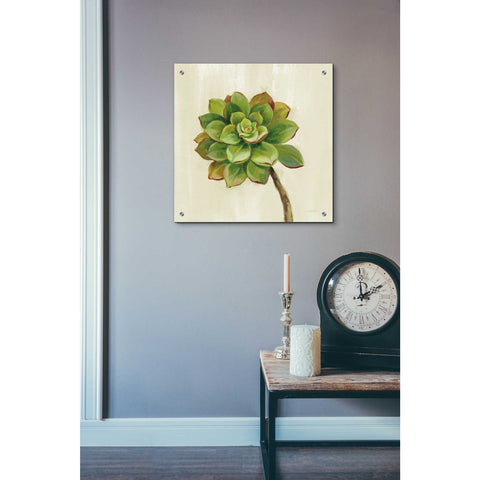 Epic Art 'Front Yard Succulent IV' by Silvia Vassileva, Acrylic Glass Wall Art,24x24