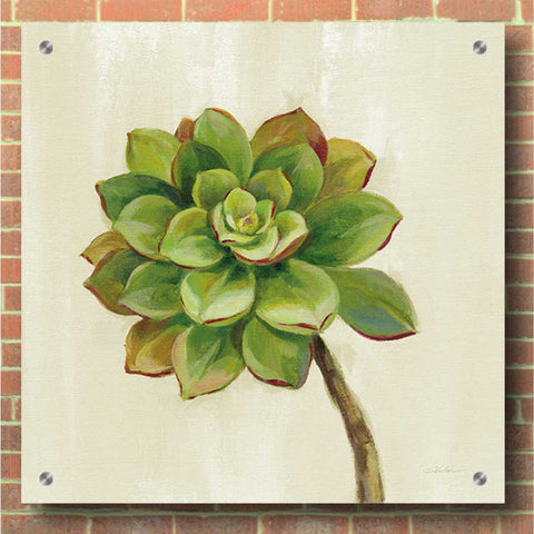 Epic Art 'Front Yard Succulent IV' by Silvia Vassileva, Acrylic Glass Wall Art,36x36