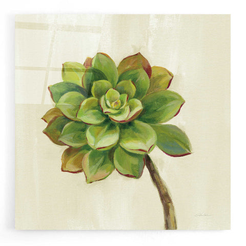Epic Art 'Front Yard Succulent IV' by Silvia Vassileva, Acrylic Glass Wall Art