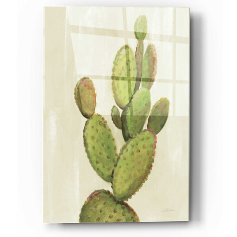 Epic Art 'Front Yard Cactus I' by Silvia Vassileva, Acrylic Glass Wall Art