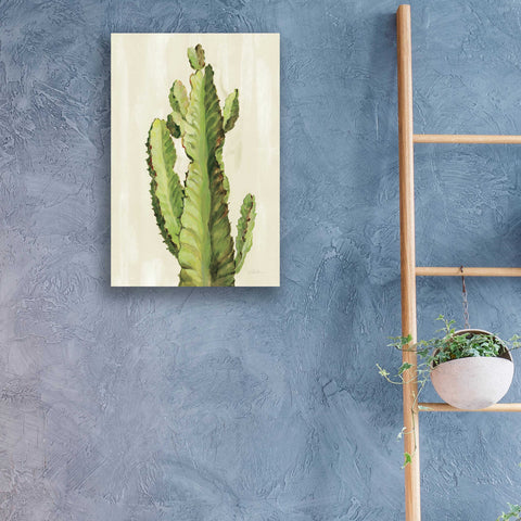 Epic Art 'Front Yard Cactus II' by Silvia Vassileva, Acrylic Glass Wall Art,16x24