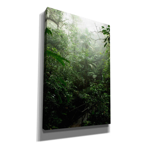 Image of 'Into The Cloud Forest' by Nicklas Gustafsson Canvas Wall Art