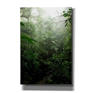 'Into The Cloud Forest' by Nicklas Gustafsson Canvas Wall Art