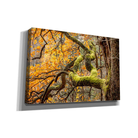 'Reaching Autumn Branch' by Nicklas Gustafsson Canvas Wall Art