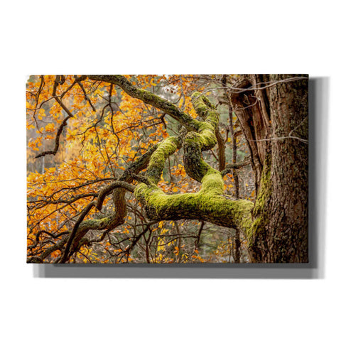 Image of 'Reaching Autumn Branch' by Nicklas Gustafsson Canvas Wall Art