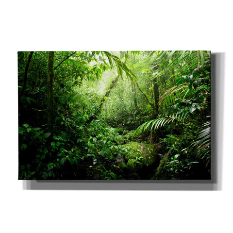 Image of 'Warm Glow Rainforest Creek' by Nicklas Gustafsson Canvas Wall Art