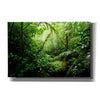 'Warm Glow Rainforest Creek' by Nicklas Gustafsson Canvas Wall Art