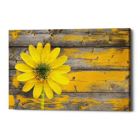 "Image of ""Wood Series: Rustic Daisy"" Giclee Canvas Wall Art"