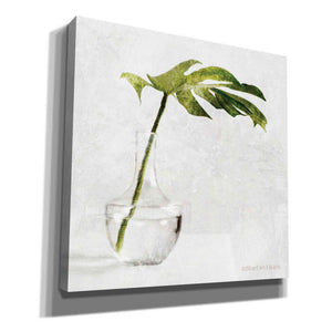 'Single Green Stem in Glass' by Bluebird Barn, Canvas Wall Art,Size 1 Sqaure