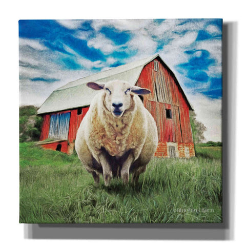 Image of 'Sunday Afternoon Sheep Pose' by Bluebird Barn, Canvas Wall Art,Size 1 Sqaure