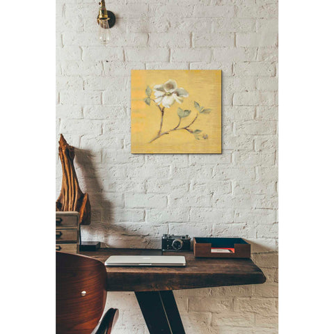 'Dogwood Blossom on Gold' by Cheri Blum, Giclee Canvas Wall Art