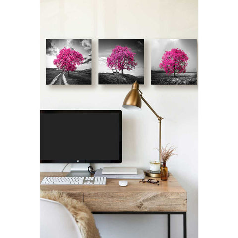 Image of 'Vibrant Tree Series: Magenta Triptych (Set of 3)' Canvas Wall Art,36 x 12