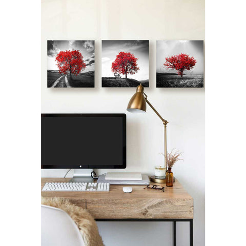 "Image of ""Vibrant Tree Series: Ruby Triptych (Set of 3)"" Giclee Canvas Wall Art"