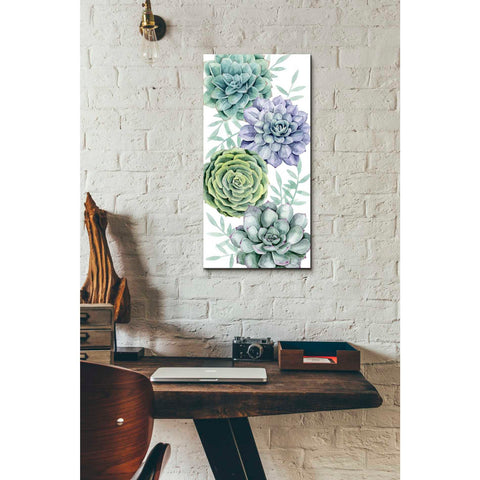 'Succulent Collection B' by Grace Popp Canvas Wall Art,12 x 24