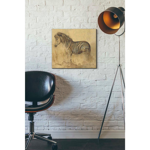 'Global Zebra Light Crop' by Cheri Blum, Giclee Canvas Wall Art