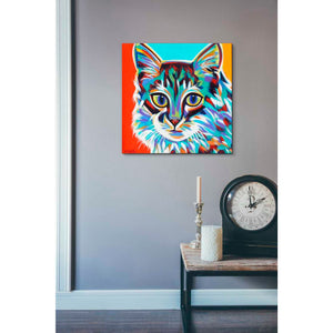 'Dramatic Cats II' by Carolee Vitaletti Giclee Canvas Wall Art