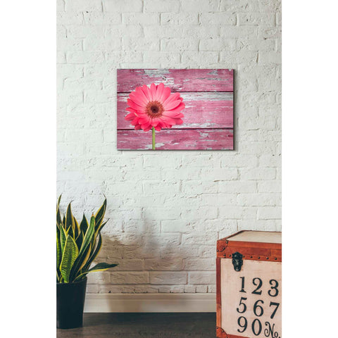 Image of 'Pink Beginnings' Canvas Wall Art,18 x 26