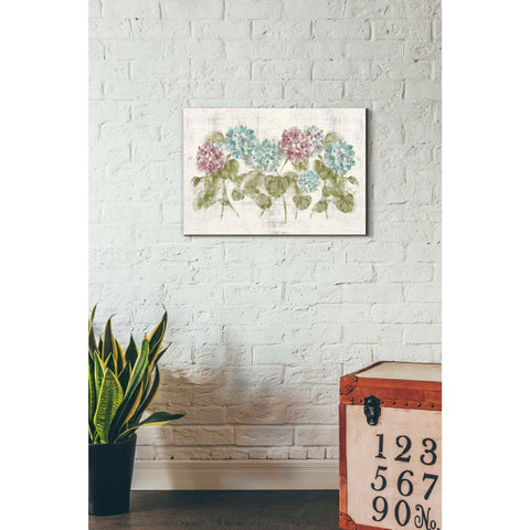 'Vibrant Row of Hydrangea No Border' by Cheri Blum, Giclee Canvas Wall Art
