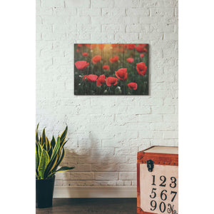"""Wood Series: Field of Poppies"" Giclee Canvas Wall Art"