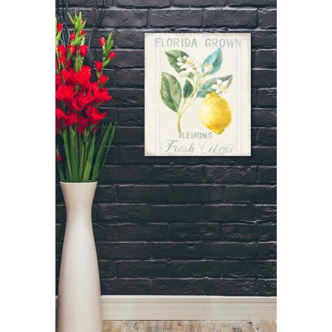 Image of 'Floursack Lemon I' by Danhui Nai, Canvas Wall Art,20 x 24