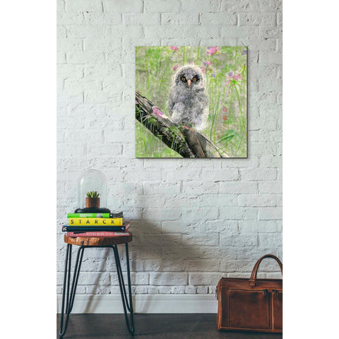 'Owlet' by River Han, Giclee Canvas Wall Art