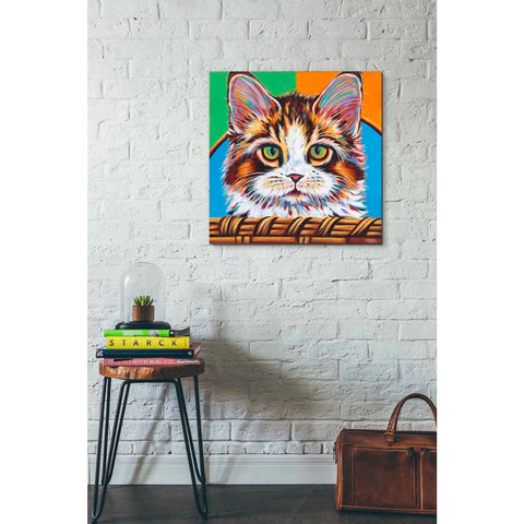 Image of 'Kitten in Basket II' by Carolee Vitaletti Giclee Canvas Wall Art