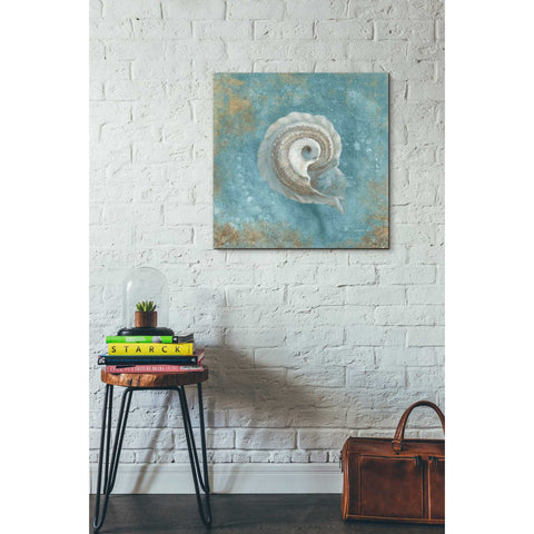 """Treasures From The Sea III"" by Danhui Nai, Giclee Canvas Wall Art"