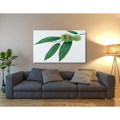 'Chestnut' by Zigen Tanabe, Giclee Canvas Wall Art