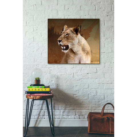 'Wildness Lioness' by Karen Smith, Giclee Canvas Wall Art
