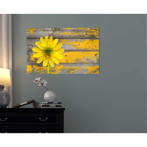 """Wood Series: Rustic Daisy"" Giclee Canvas Wall Art"