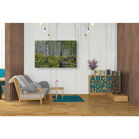 "Image of ""Aspen Grove Rail Fence,"" Giclee Canvas Wall Art"