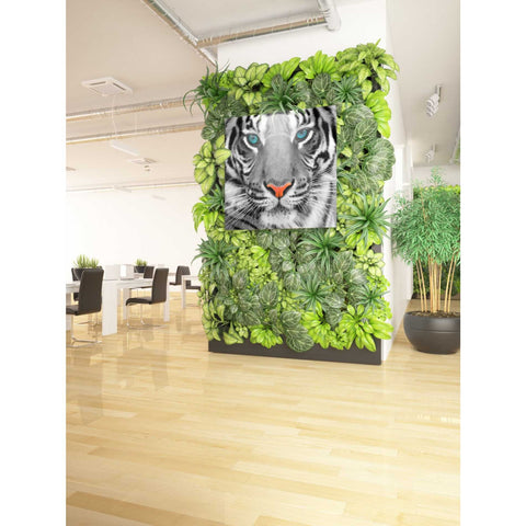 'Thrill of the Tiger' Giclee Canvas Wall Art
