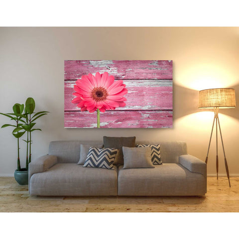 Image of 'Pink Beginnings' Canvas Wall Art,40 x 60