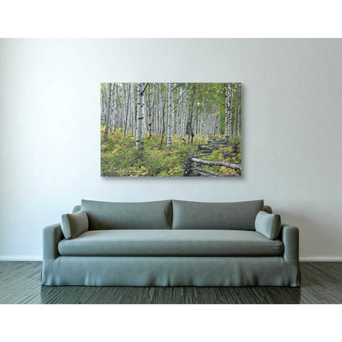 """Aspen Grove Rail Fence,"" Giclee Canvas Wall Art"
