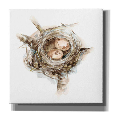 'Bird Nest Study I' by Ethan Harper, Canvas Wall Art