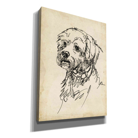 Image of 'Breed Studies III' by Ethan Harper, Canvas Wall Art