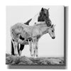 'BandW Horses I' by PH Burchett, Canvas Wall Art