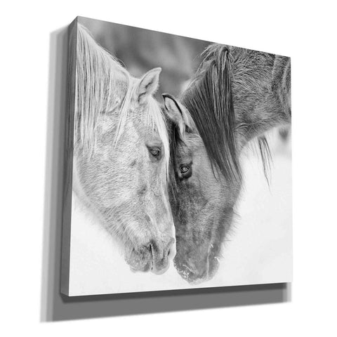 'BandW Horses VII' by PH Burchett, Canvas Wall Art