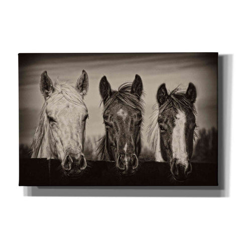 'Three Amigos I' by PH Burchett, Canvas Wall Art