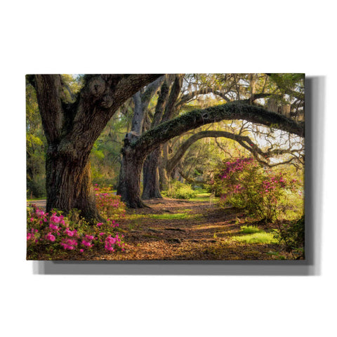 'Under the Live Oaks I' by Danny Head, Canvas Wall Art
