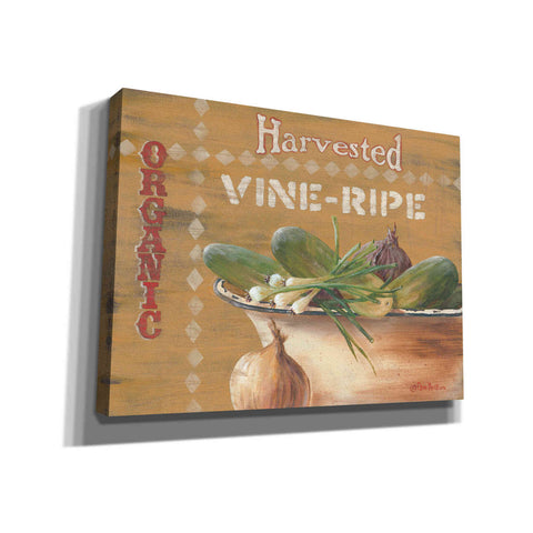 'Vine Ripe' by Pam Britton, Canvas Wall Art