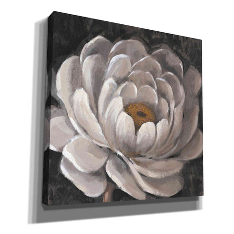 'Nuetral Fleur II' by Tim O'Toole, Canvas Wall Art