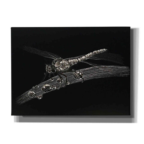 'Dragonfly' by Avery Multer, Canvas Wall Art