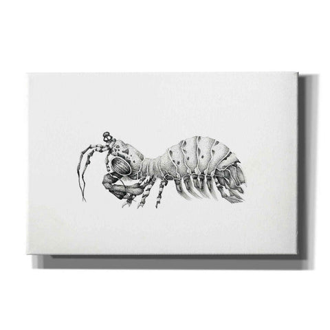 Image of 'Peacock Mantis Shrimp' by Avery Multer, Canvas Wall Art