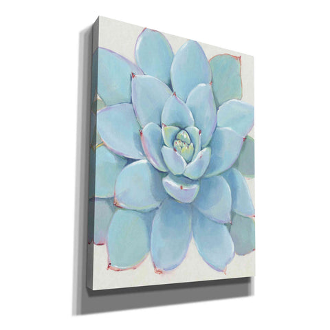 Image of 'Pastel Succulent I' by Tim O'Toole, Canvas Wall Art