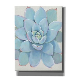'Pastel Succulent I' by Tim O'Toole, Canvas Wall Art