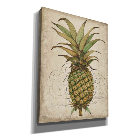 Image of 'Pineapple Study I' by Tim O'Toole, Canvas Wall Art