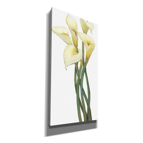 'Callas on Silver I' by Tim O'Toole, Canvas Wall Art